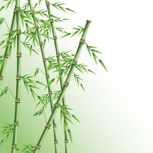 Tronc de bambou decoratif cheap massifs et potes tailler et claircir les bambous with tronc de - Tronc de bambou decoratif ...