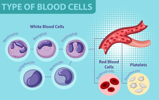 Type De Cellules Sanguines Vecteur gratuit