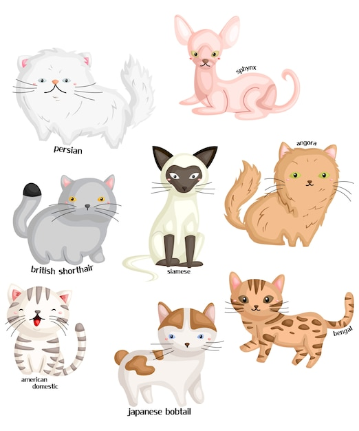 Types de chat Vecteur Premium