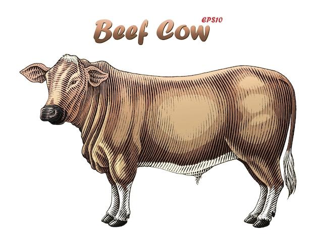 Vache De Boeuf Dans Le Style De Gravure Vecteur gratuit