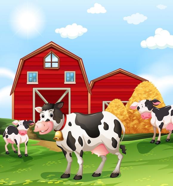 Vaches dans les terres agricoles Vecteur Premium