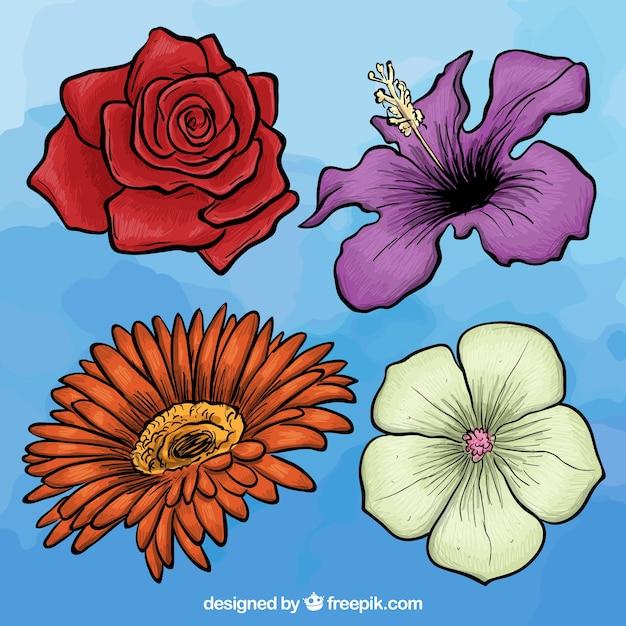 Variété de fleurs dessinées à la main Vecteur gratuit