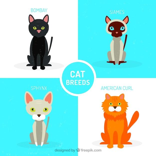 Variété de pack de chat Vecteur gratuit