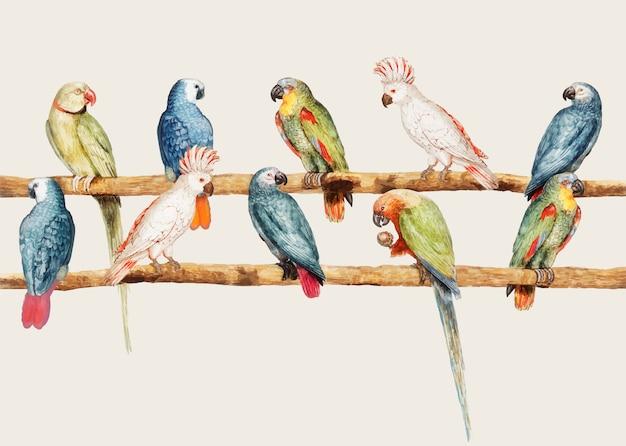 Variété de perroquet dans le style vintage Vecteur gratuit
