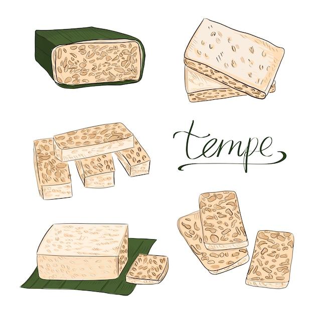 Vecteur alimentaire tempeh ou tempe Vecteur Premium