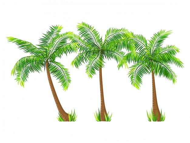 Vecteur des arbres de noix de coco mis isolé sur blanc Vecteur Premium