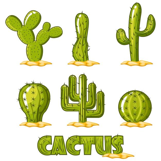 Vecteur De Collection De Cactus Vecteur Premium