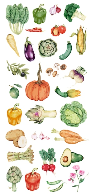 Vecteur de collection de légumes dessinés à la main Vecteur gratuit