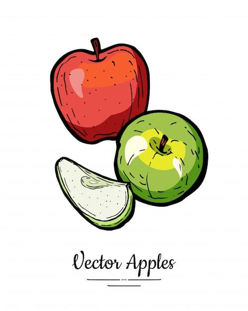 Vecteur De Pommes Isolé. Pommes Coupées Entières. Illustration De Fruits Rouges Rouges Dessinés à La Main Vecteur Premium
