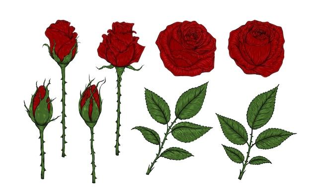 Vecteur De Rose Rouge Mis à La Main De Dessin Télécharger