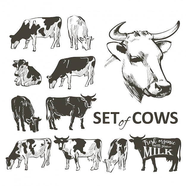 Vecteur Série De Vaches Vecteur Premium