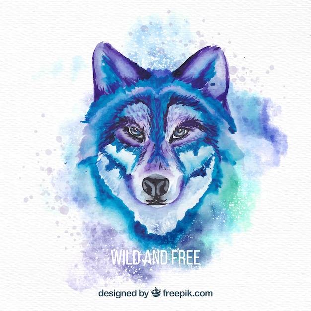Le visage du loup sauvage d'aquarelle Vecteur gratuit