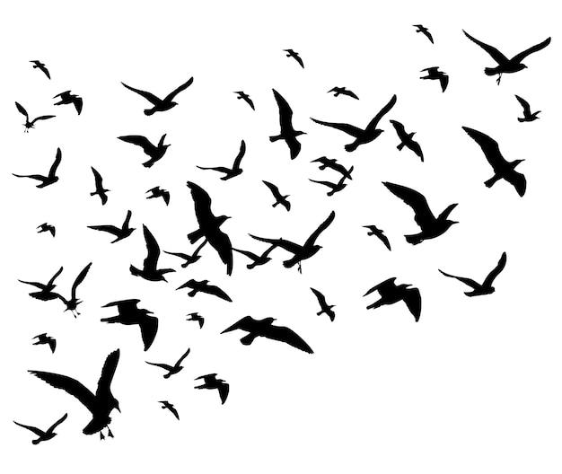 Vol d'oiseaux troupeau illustration vectorielle isolée sur fond blanc. silhouette de faucon pigeon noir Vecteur Premium