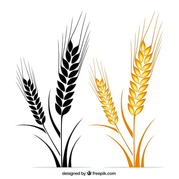 Wheat Ears Vecteur gratuit