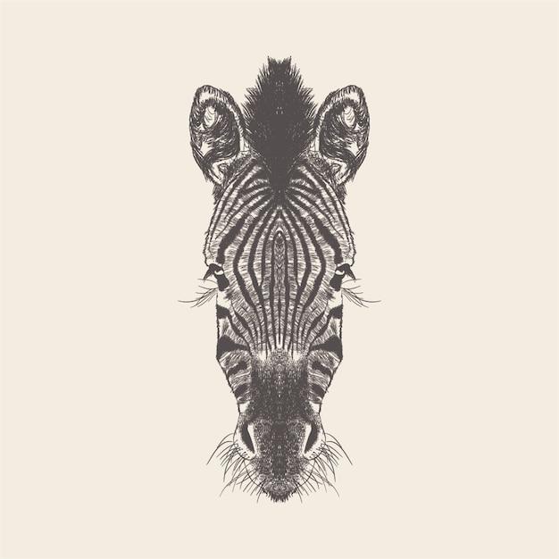 Zebra illustration, conception dessinée à la main. Vecteur Premium