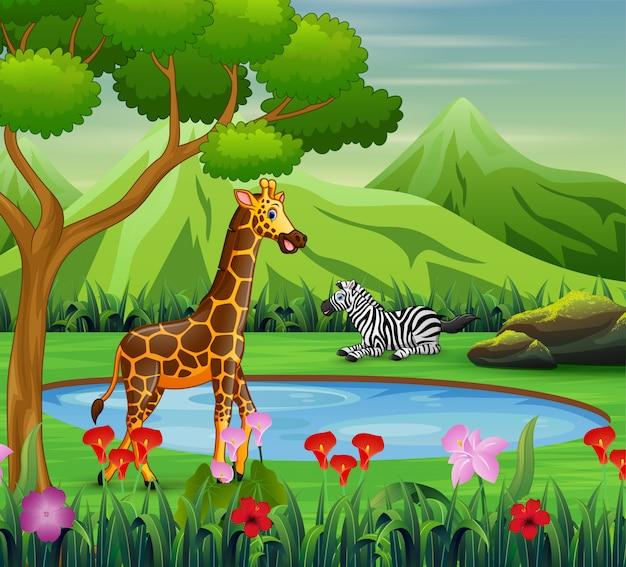 Zèbre de dessin animé et girafe vivant près d'un point d'eau Vecteur Premium