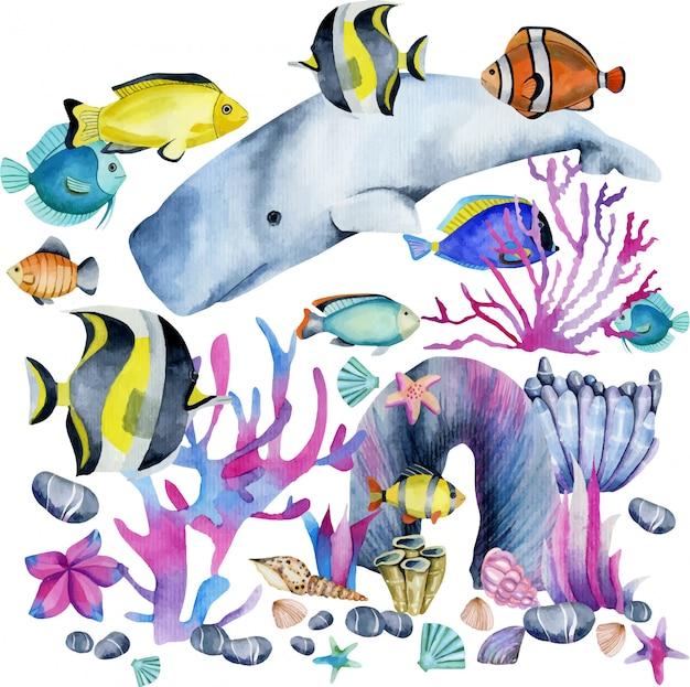 Acuarela de cachalote e ilustración de peces exóticos. Vector Premium