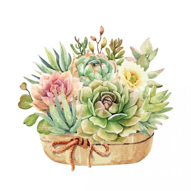 Acuarela de cactus y suculentas en pote y lazo con cinta. Vector Premium