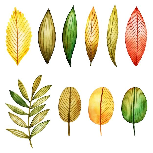 Acuarela invierno y año nuevo floral y colección de hojas ...