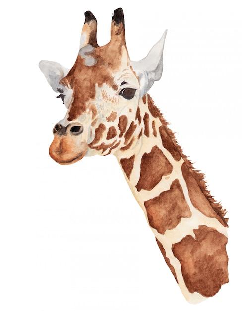Acuarela retrato de una jirafa Vector Premium