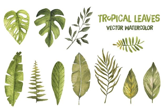 Acuarela vector tropical hojas de hoja de palma exótica selva Vector Premium