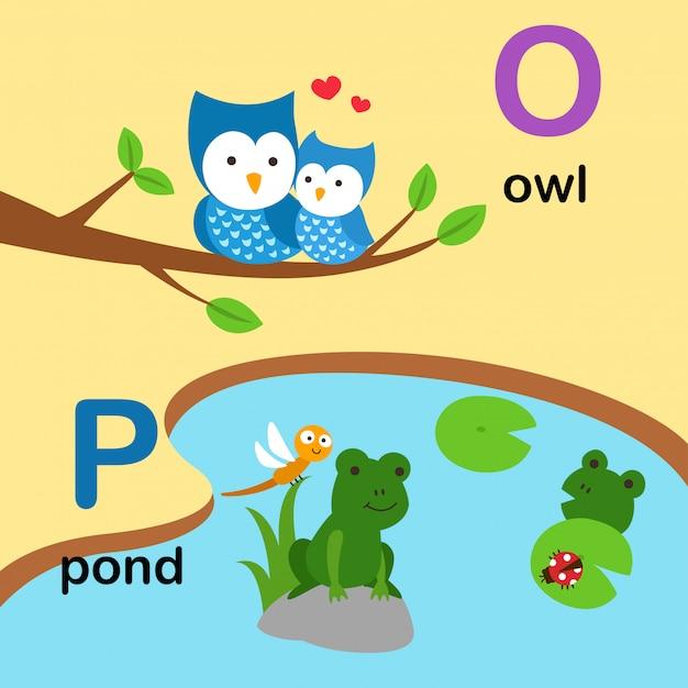 Alfabeto letra o para búho, p para estanque, ilustración Vector Premium