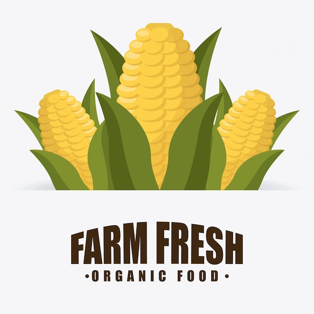 Alimentos orgánicos vector gratuito