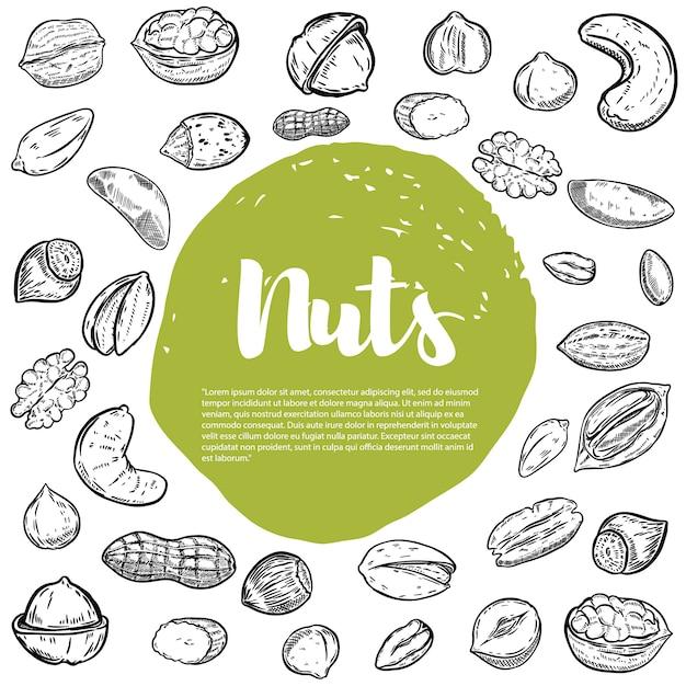 Anacardo, avellana, nuez, pistacho, nueces pecanas. bocetos de nueces. elementos para el menú, volante. ilustración Vector Premium
