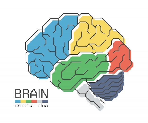 Anatomía del cerebro con diseño de color plano y trazo de contorno. idea creativa concepto Vector Premium