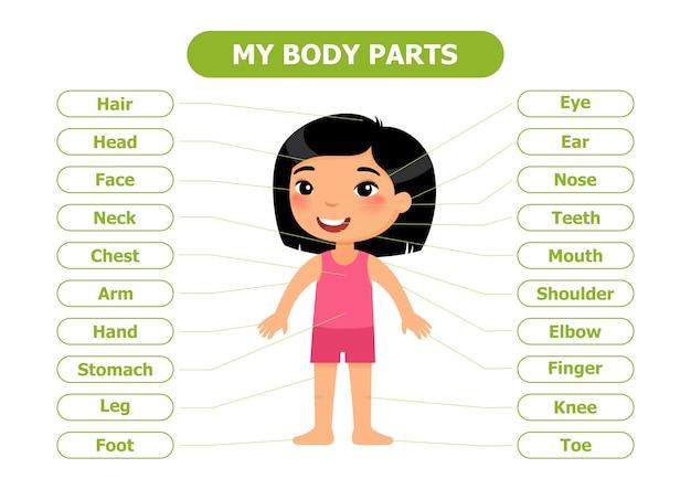 Anatomía infantil. Vector Premium