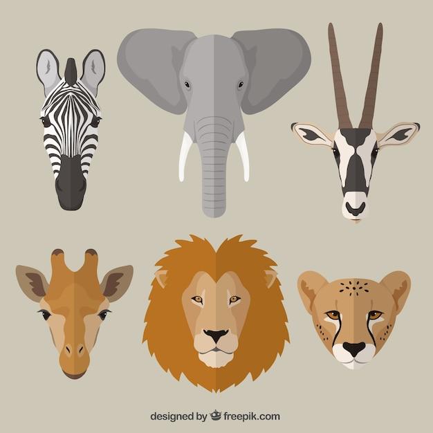 Animales africanos Vector Premium