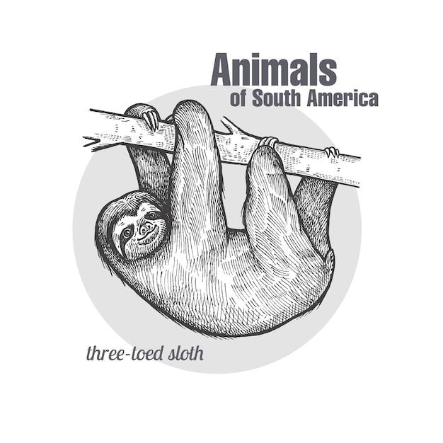 Animales de américa del sur sloth. Vector Premium