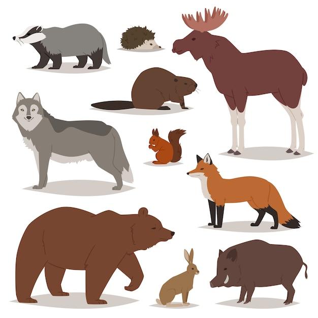 Los animales del bosque de dibujos animados personajes animales oso zorro y lobo salvaje o jabalí en el bosque ilustración conjunto de alces erizo y ardilla aislado sobre fondo blanco. Vector Premium