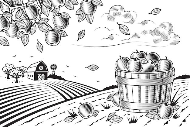 Apple cosecha paisaje blanco y negro Vector Premium