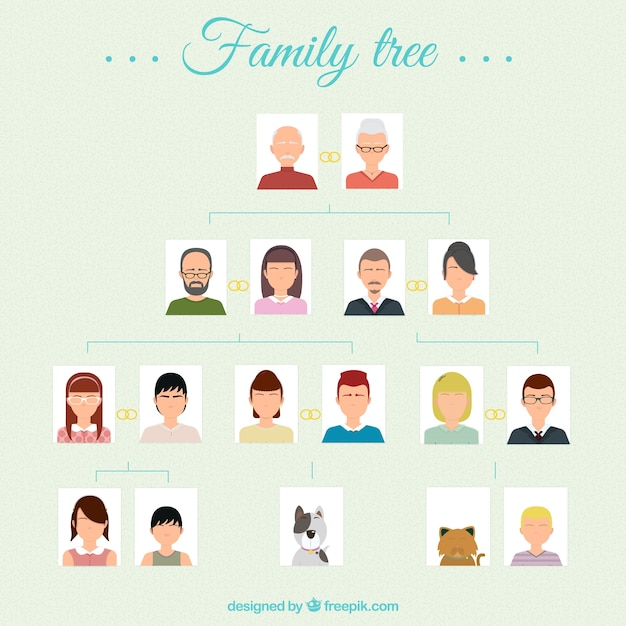 árbol Genealógico Descargar Vectores Gratis