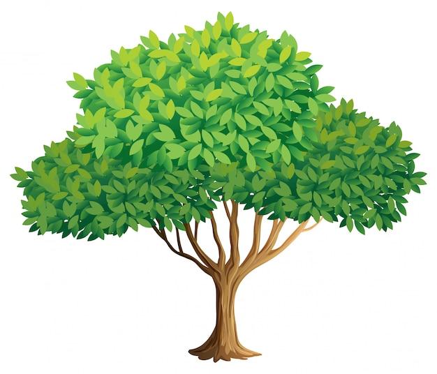 Árbol vector gratuito