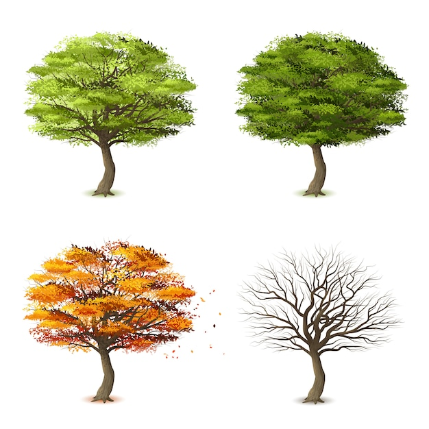 Árboles en cuatro estaciones vector gratuito