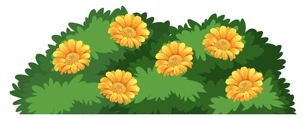 Un arbusto de flores aisladas vector gratuito