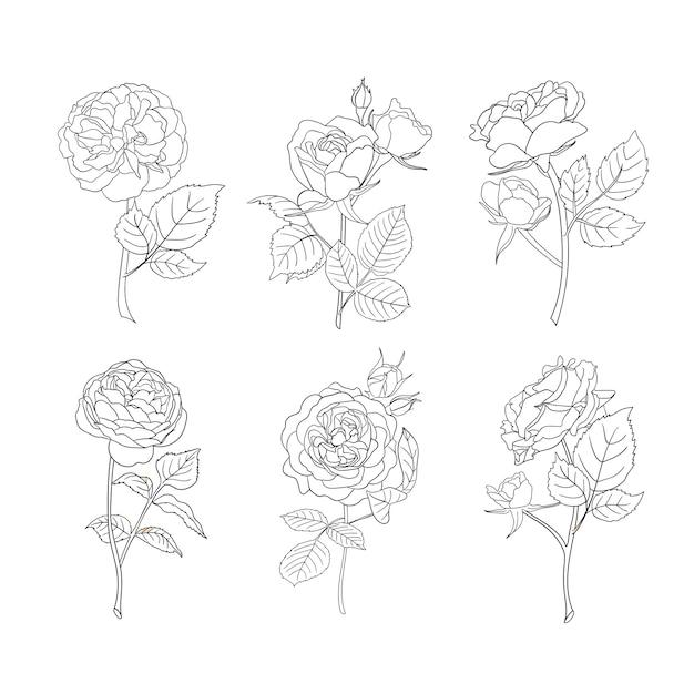 Arte de línea de rosas. iconos de vector de flor. Vector Premium