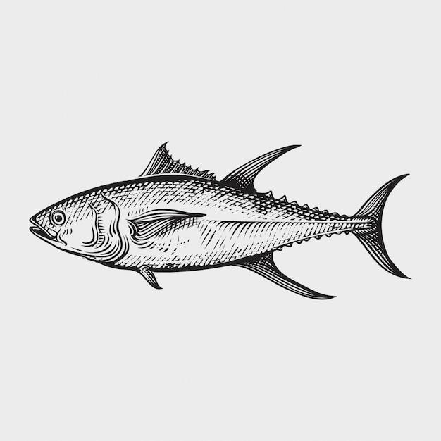Atún mariscos dibujados a mano ilustraciones estilo grabado. Vector Premium