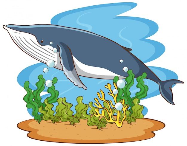 Ballenas nadando bajo el océano vector gratuito