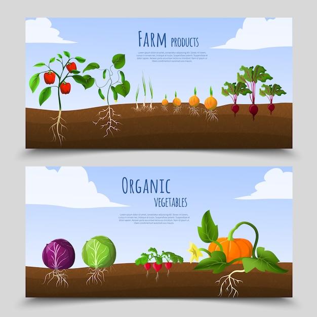 Banners horizontales de alimentos saludables vector gratuito