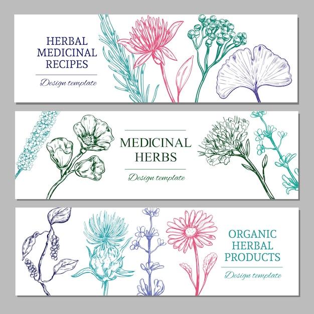 Banners horizontales de hierbas medicinales con diferentes especias orgánicas saludables vector gratuito