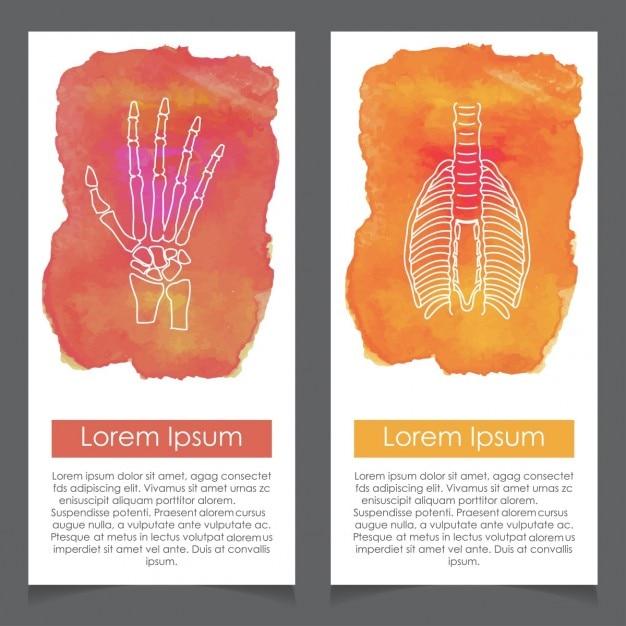 Banners sobre la anatomía humana, mano y tórax   Descargar Vectores ...