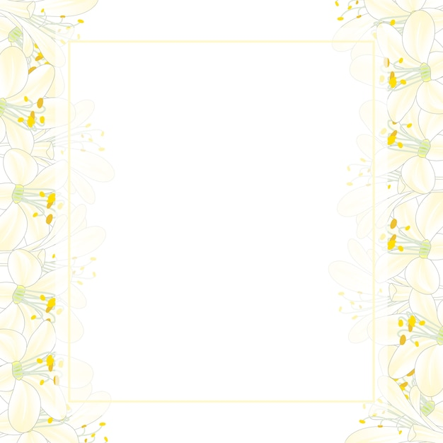 Blancanieves agapanthus banner card border Vector Premium