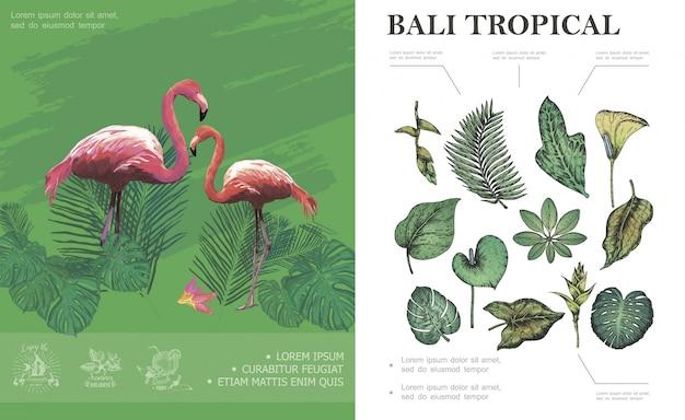 Boceto concepto tropical de bali con flamencos hermosa palma plátano monstera philodendron frangipani hojas y plantas vector gratuito