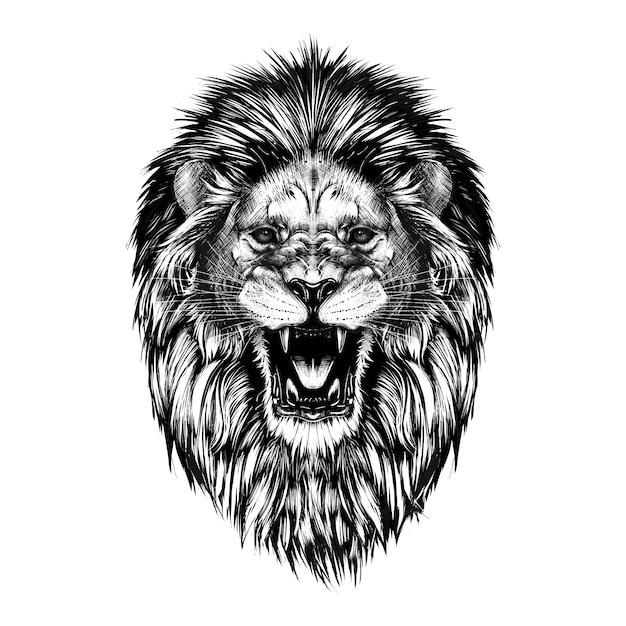 Boceto dibujado mano de cabeza de león en negro aislado Vector Premium