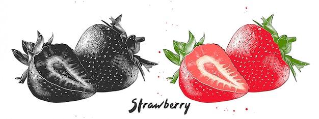 Boceto dibujado a mano de fresa Vector Premium