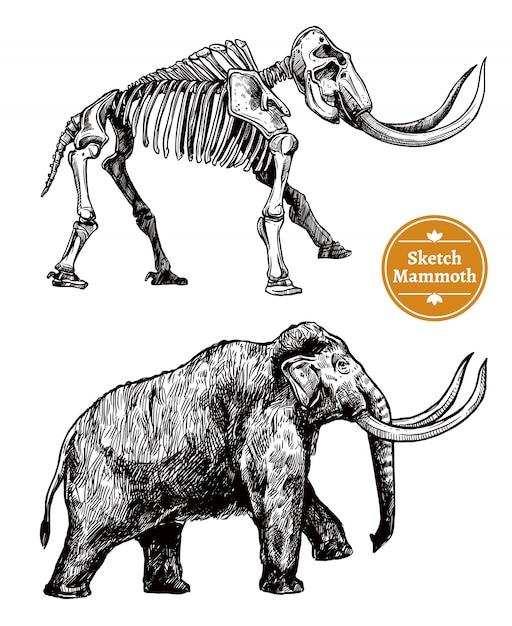 Boceto dibujado a mano mamut vector gratuito