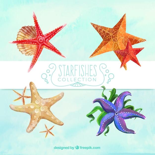 Bonitas Estrellas De Mar De Acuarela Descargar Vectores Gratis